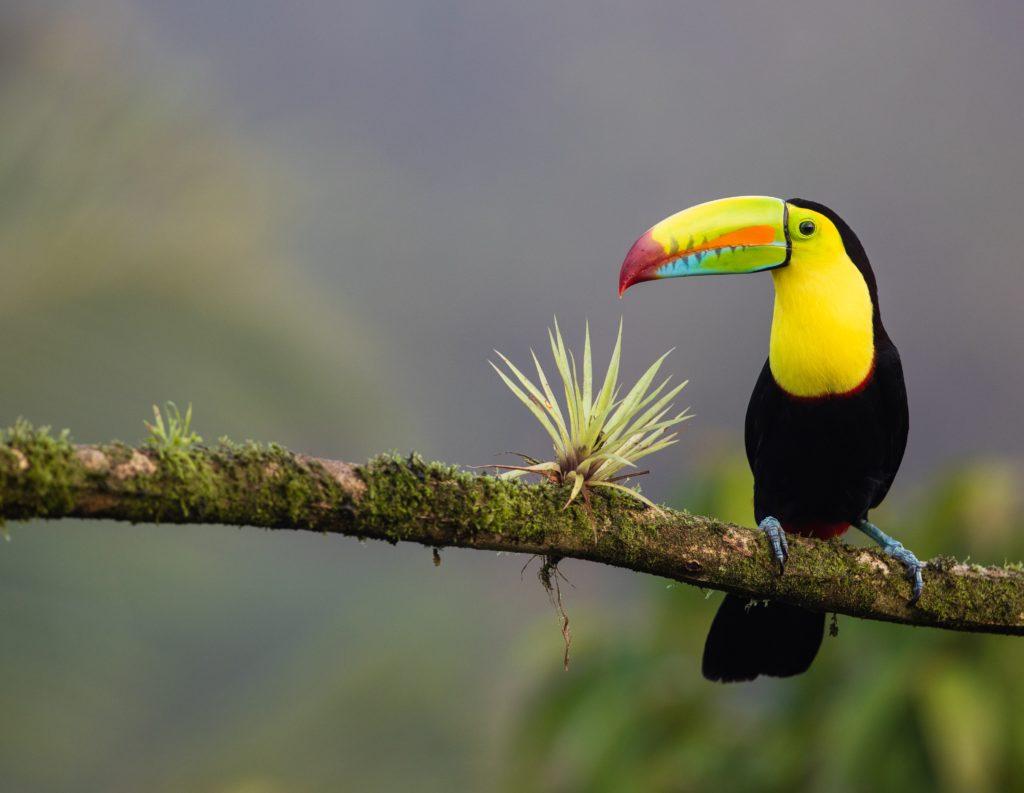 image oiseau pour écotourisme costa rica