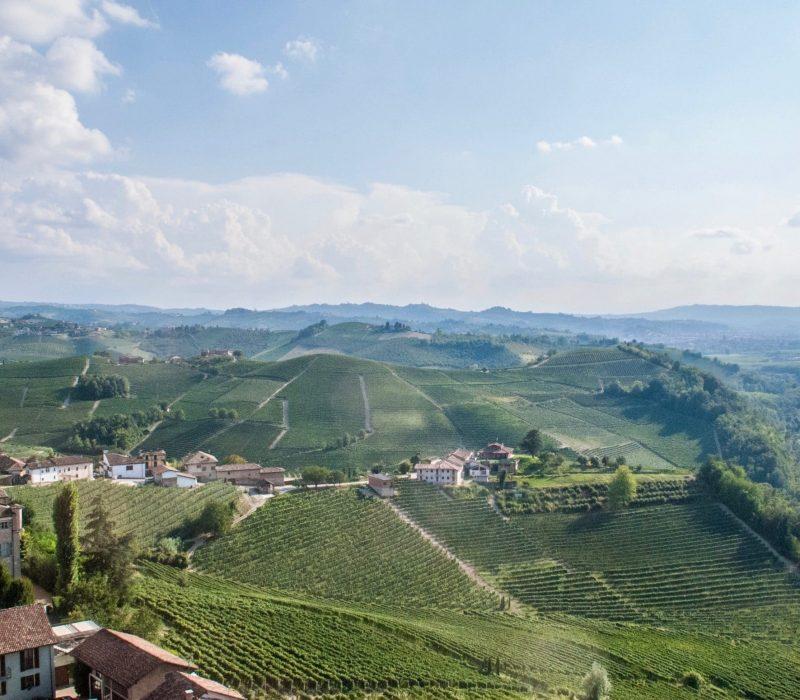 Vue magnifique des vignes dans le Piémont